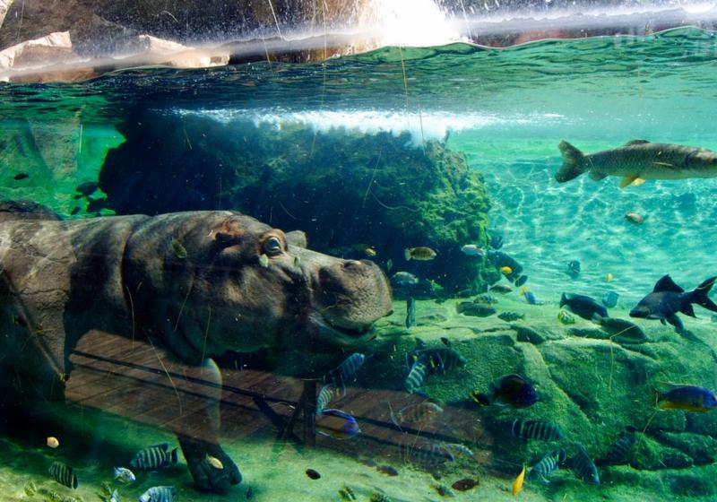 Bioparc valencia Entradas aquarium valencia