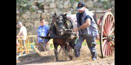 Arranca el XV Concurso de Tiro y Arrastre Ciudad de Valencia